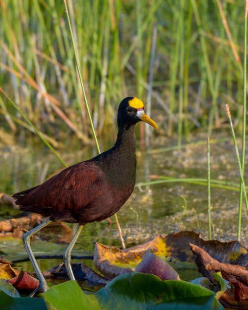 Yucatan Birding Tours